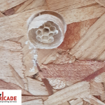 start of a wasp nest with only one queen inside